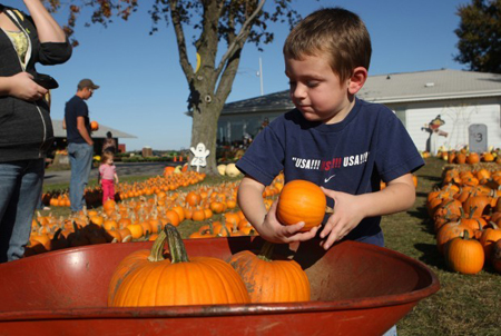 Noah Kneifel, 4, of Westville, picks out several pumpkins at Coulter's Produce and Greenhouses. While they may not have a bumper crop, local producers say their pumpkins are healthy and available in greater variety this season after a dismal crop last year. (Photograph by The Times.)
